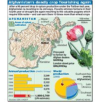 AFGHANISTAN: Opium flourishes again infographic