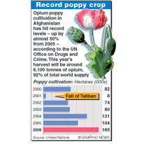 AFGHANISTAN: Record opium poppy crop (1) infographic
