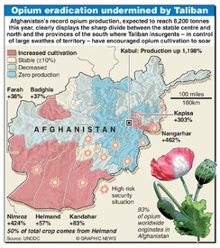 AFGHANISTAN: Record opium crop infographic