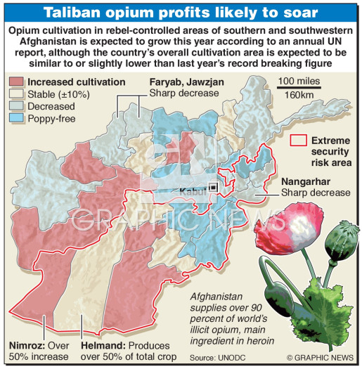 Opium cultivation infographic
