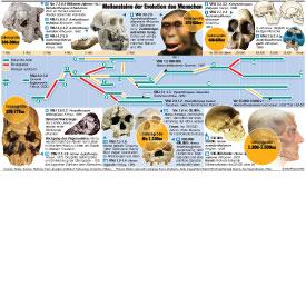 Meilensteine der Evolution des Menschen infographic