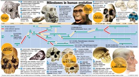 DARWIN: Human family tree infographic