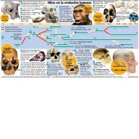 Hitos en la evolución humana infographic