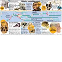 Mijlpalen menselijke evolutie infographic