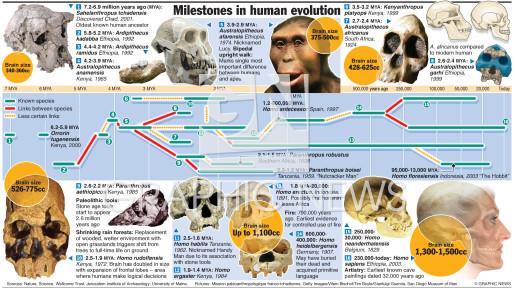 Human family tree infographic