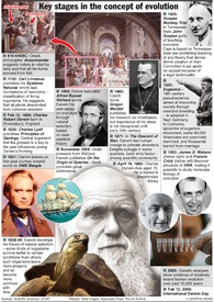 DARWIN: Evolution timeline infographic
