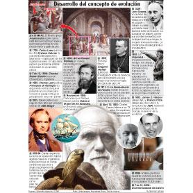 Desarrollo del concepto de evolución infographic
