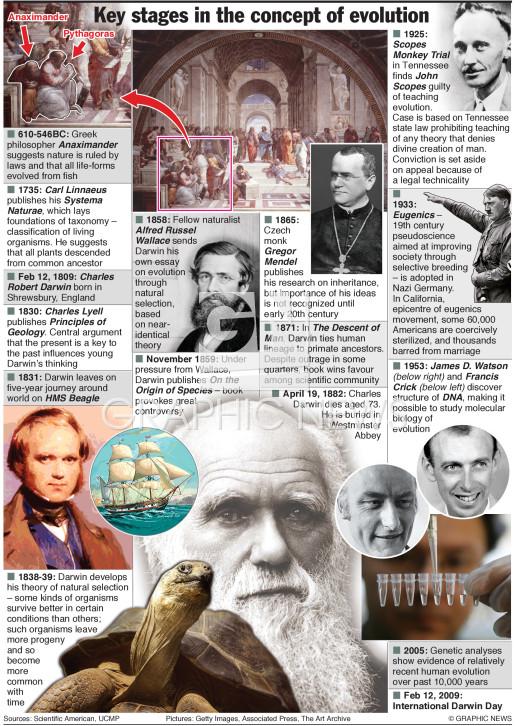 Evolution timeline infographic