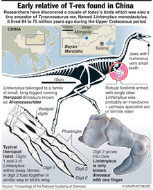 Early relative of T-rex found in China  infographic