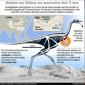 Ancestro del Tiranosaurio Rex - Interactivo infographic