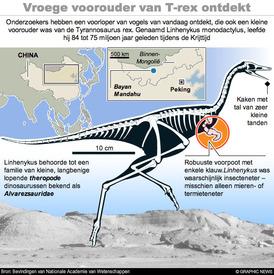Vroege voorouder van T-rex ontdekt in China infographic