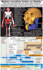 Möglicher menschlicher Vorfahre infographic
