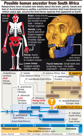 SCIENCE: Possible human ancestor infographic