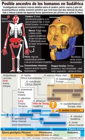 Posible ancestro de los humanos infographic