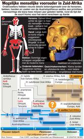 WETENSCHAP: Mogelijk menselijke voorouder (embargo tot 20.00 u Ned. tijd) infographic