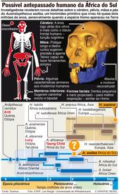 Possível antepassado humano infographic