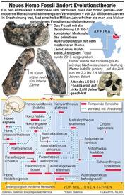 WISSENSCHAFT: Neues Homo Fossil könnte Evolutionstheorie des Menschen ändern infographic