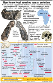 SCIENCE: New Homo fossil rewrites human evolution infographic