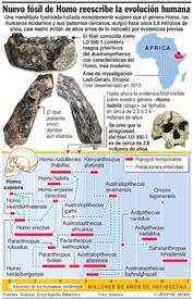 CIENCIA: Nuevo fósil de Homo reescribe la evolución humana infographic