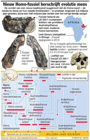WETENSCHAP: Nieuw Homo-fossiel herschrijft evolutie mens infographic