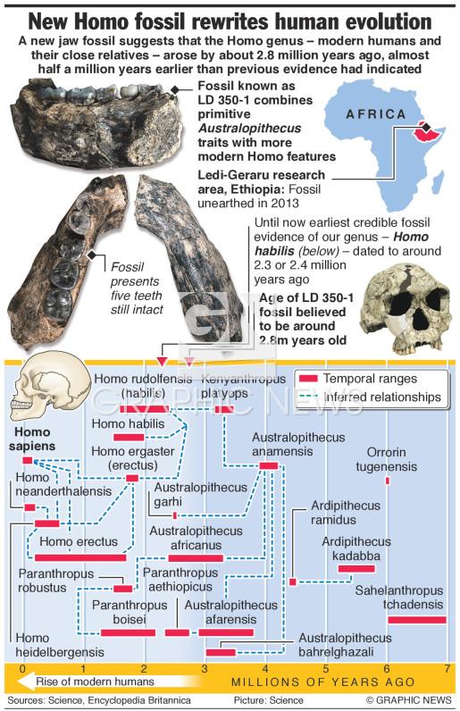 New Homo fossil rewrites human evolution infographic
