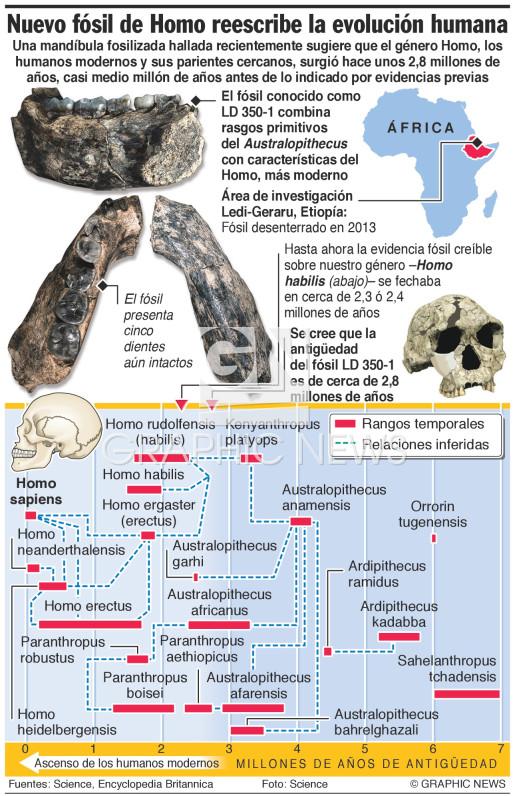Nuevo fósil de Homo reescribe la evolución humana infographic