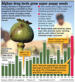 AFGHANISTAN: New poppy seeds to boost opium output infographic