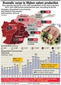 AFGHANISTAN: Dramatic surge in opium production infographic