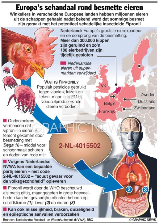 Schandaal rond besmette eieren infographic