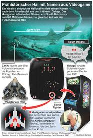 WISSENSCHAFT: Prähistorischer Hai wird nach Videospiel benannt infographic