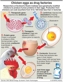 SCIENCE: Chicken eggs as drug factories infographic