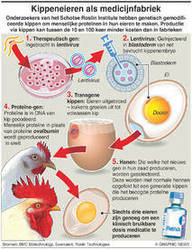 WETENSCHAP: Chicken eggs as drug factories infographic