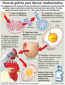 CIÊNCIA: Ovos de galinha para fabricar medicamentos infographic
