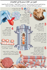 FOR TRANSLATION SCIENCE: Meat grown in labs infographic