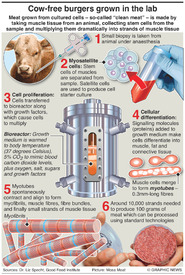 SCIENCE: Meat grown in labs infographic