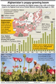 AFGHANISTAN: Opium poppy production boom infographic