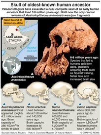 SCIENCE: Oldest-known human ancestor infographic
