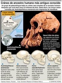 CIENCIA: El más antiguo ancestro humano conocido infographic