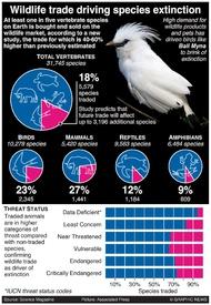 ENVIRONMENT: Wildlife trade driving species extinction infographic