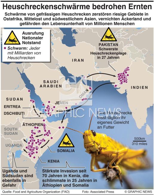 Heuschreckenplage in Ostafrika und Asien infographic