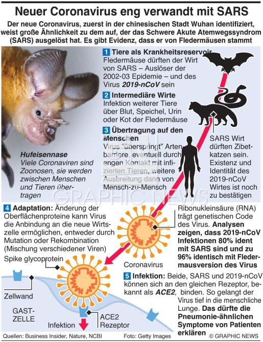 Neuer Coronavirus eng verwandt mit SARS infographic