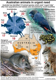 ENVIRONMENT: Australian animals in urgent need infographic