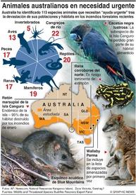AMBIENTE: Animales australianos en necesidad urgente infographic