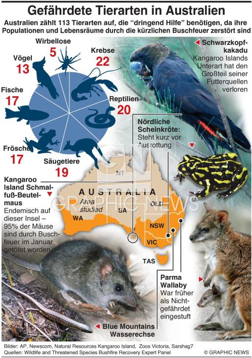 Australische Tiere brauchen dringend Hilfe infographic