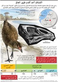 علوم: اكتشاف أحد أقدم طيور العالم infographic