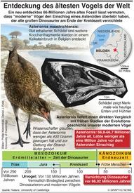 WISSENSCHAFT: Ältester Vogel der Welt infographic