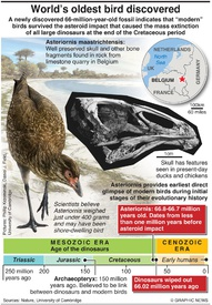 SCIENCE: World's oldest bird discovered infographic