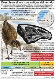 CIENCIA: Descubren el ave más antigua del mundo infographic
