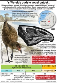 's Werelds oudste vogel ontdekt infographic