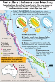 ENVIRONMENT: Great Barrier Reef mass bleaching infographic